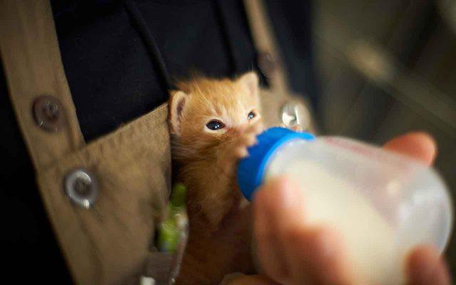 кошкам давать молоко