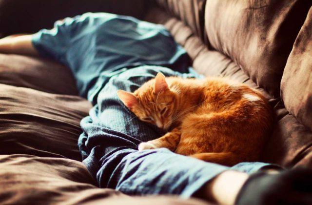 Фото на тему «Почему нельзя спать с кошкой?»