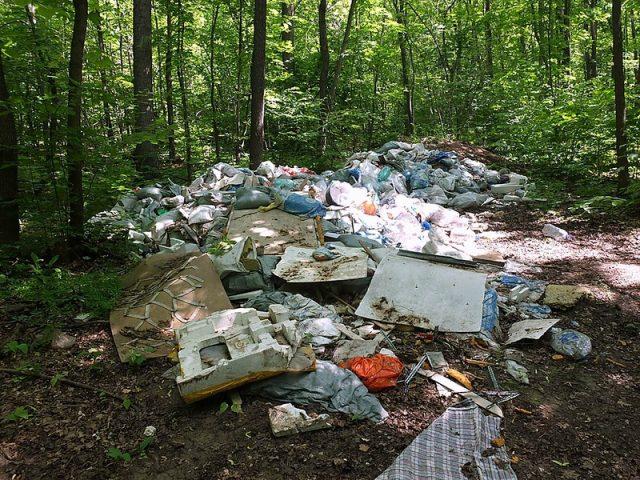 Почему нельзя мусорить в лесу?
