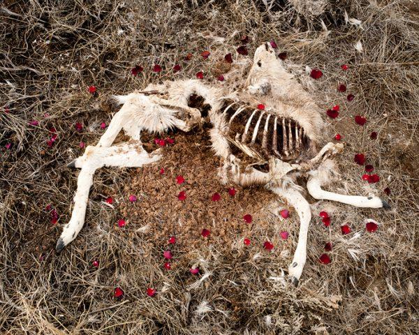 Почему нельзя есть мертвых животных?