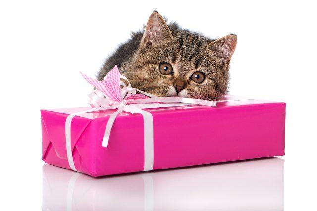 Фото на тему «Почему нельзя дарить животных?»