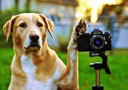17 3 250x175 - Чому не можна фотографувати собак?