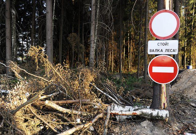 Почему нельзя рубить деревья?