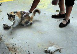 15 1 250x175 - Почему нельзя убивать кошек?