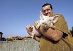 19 250x175 - Почему мусульмане не едят свинину история?