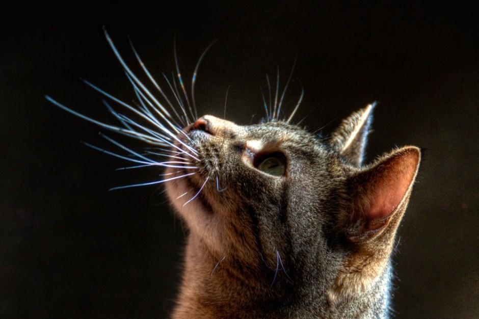 Фото на тему «Почему нельзя стричь усы кошкам?»