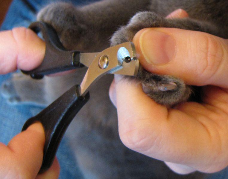 Фото на тему «Почему нельзя стричь когти котам?»