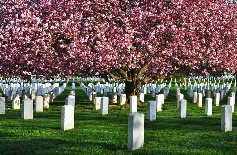 Фото на тему «Чому не можна їсти на кладовищі?»
