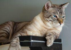 Фото на тему «Почему нельзя стричь ногти кошкам?»
