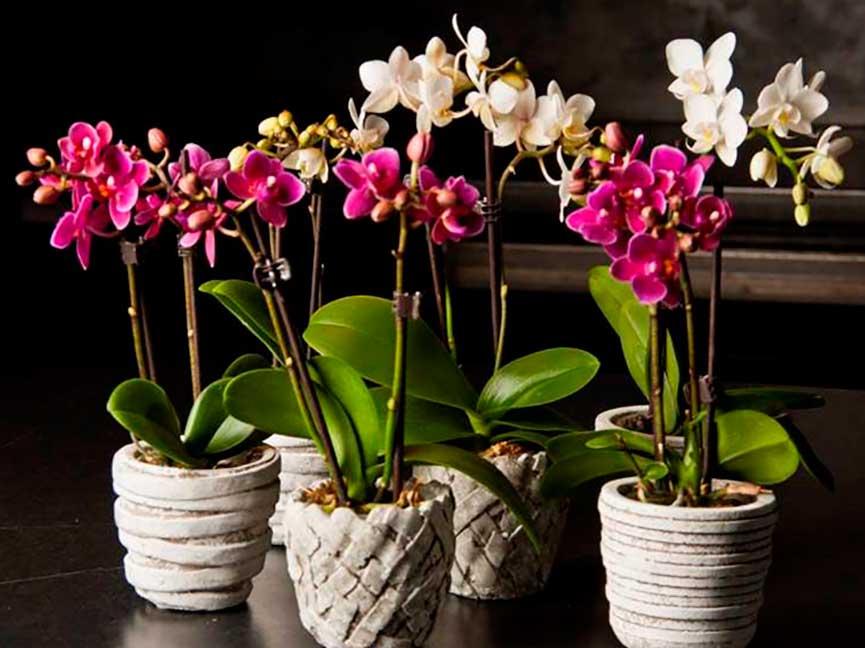 Фото на тему «Почему нельзя держать дома орхидеи?»