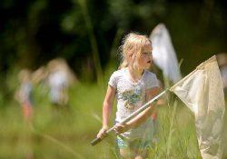 Фото на тему «Почему нельзя ловить бабочек?»
