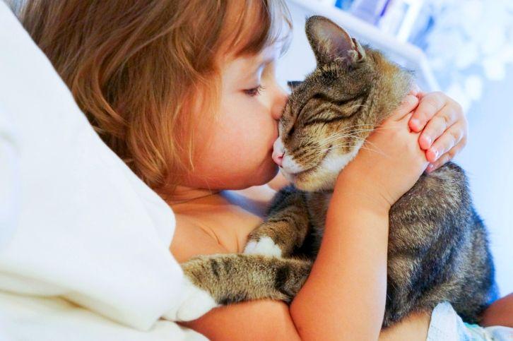 Фото на тему «Почему нельзя целовать кошек?»