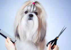 Фото на тему «Почему нельзя стричь собаку?»