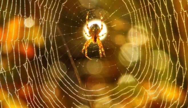 Фото на тему «Чому не можна чавити павуків?»
