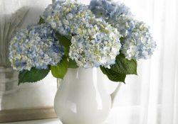 Фото на тему «Почему нельзя держать дома искусственные цветы?»