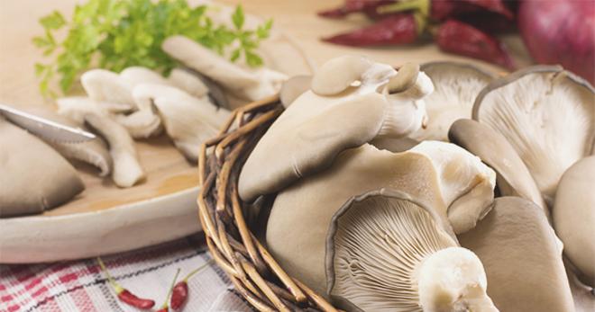 Фото на тему «Почему нельзя употреблять в пищу старые грибы?»