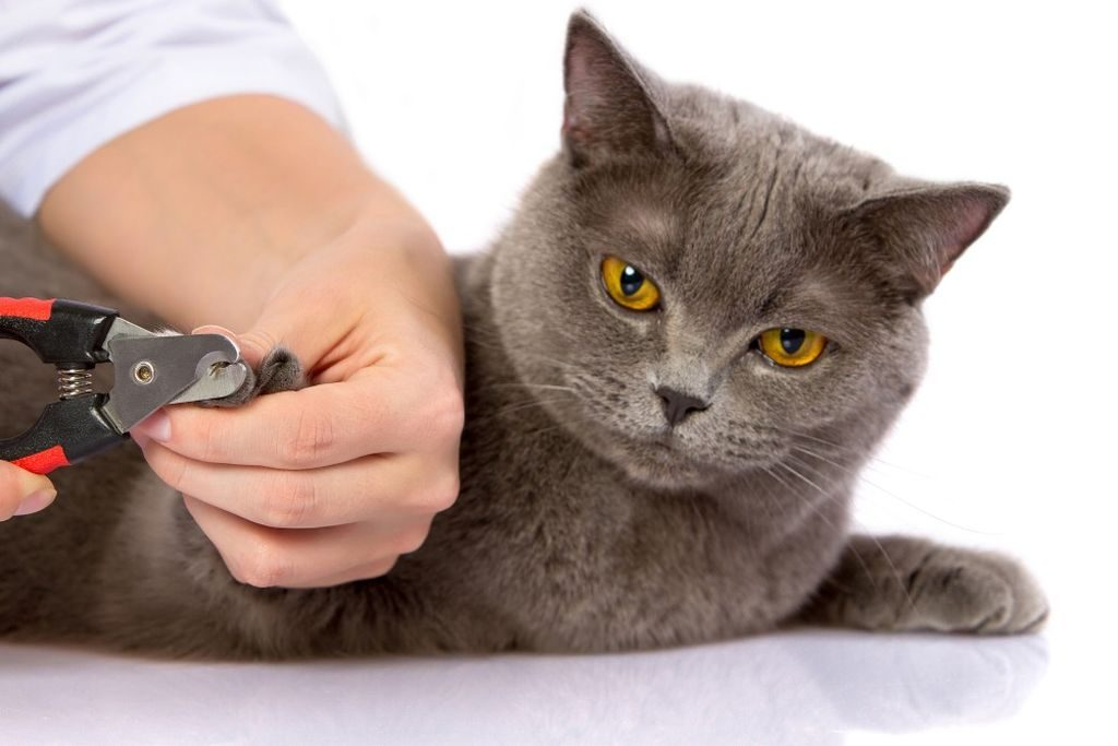 Фото на тему «Чому не можна стригти нігті кішкам?»
