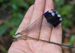 Фото на тему «Почему нельзя ловить стрекоз на водоемах?»
