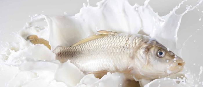 Фото на тему «Чому не можна їсти рибу з молоком?»