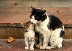 Фото на тему «Почему нельзя называть животных человеческими именами?»