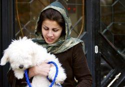 Фото на тему «Почему мусульманам нельзя держать дома собаку?»