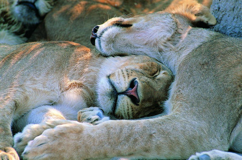 Фото на тему «Почему нельзя спать с животными?»