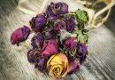 Почему нельзя хранить сухие розы дома?