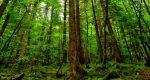 Почему нельзя шуметь в лесу?